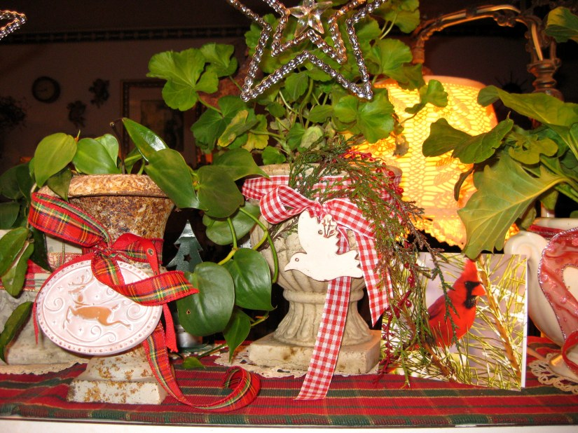 Cardinal card and plants